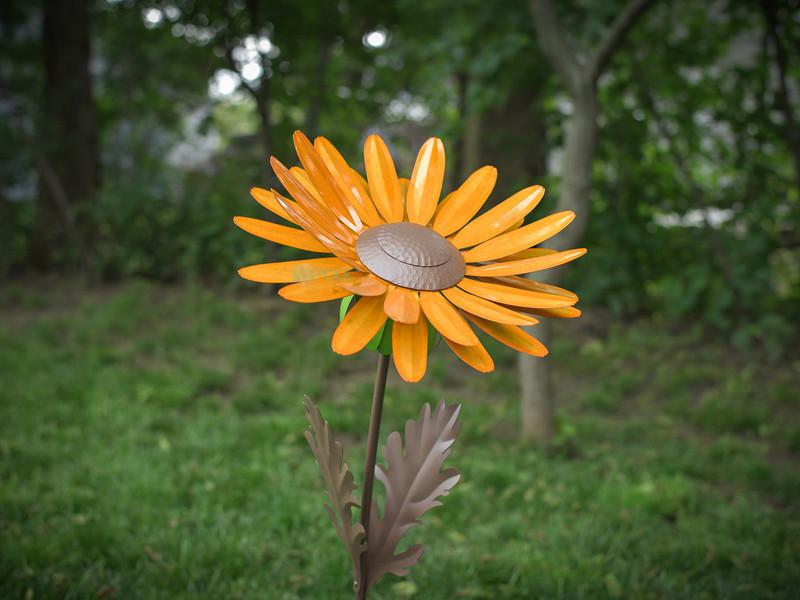 Desert Steel Daisy Garden Torch Orange 409 008