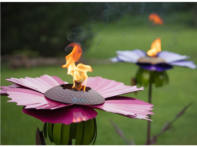 Desert Steel Cosmos Flower Garden Torch Pink 409 007