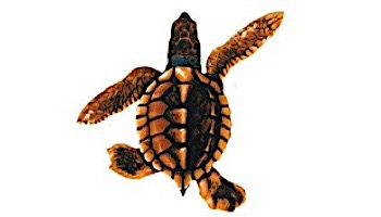"Porcelain Mosaic Turtle Brown   Baby B 5""x5""   PORC-ST21B-BR"
