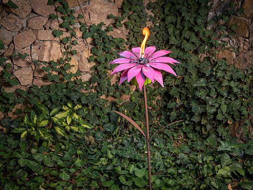Desert Steel Bishop Dahlia Garden Torch 409 002