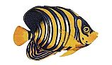 Porcelain Mosaic Reef Fish   Regal Angelfish   PORC-RF8-8